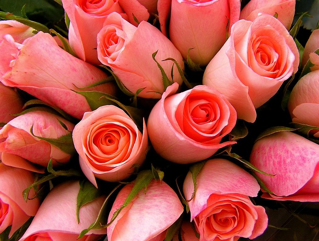 Живые цветы в хорошем качестве